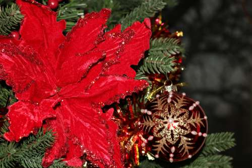 Poinsettia And Christmas Ball