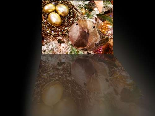 Bird And Golden Egg Reflection