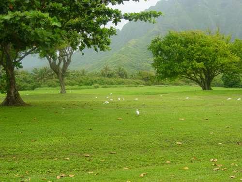 nature green grassland natural landscape grass