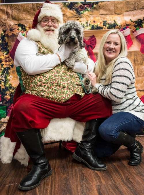 dog santa christmas adorable santa claus