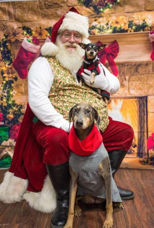 dog santa christmas adorable canidae