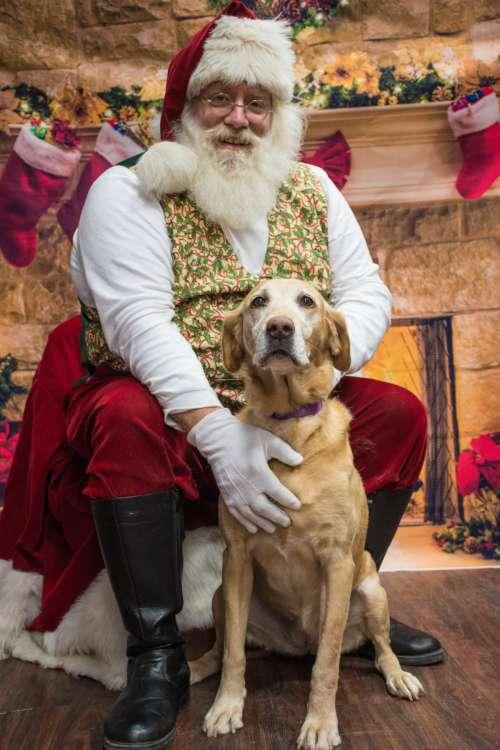 dog santa christmas adorable mammal