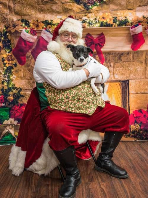 dogs santa christmas event canidae