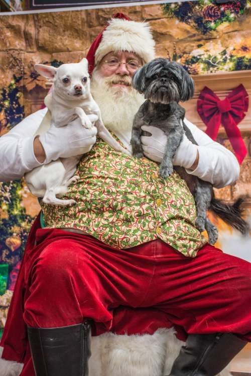dogs santa love dog canidae