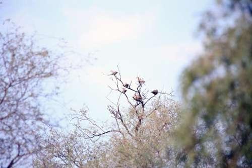 birds tree branch blossom spring
