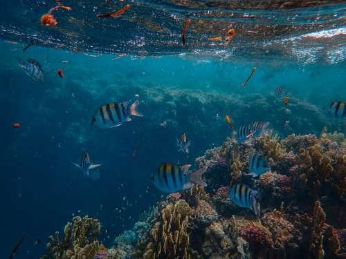 sea underwater coral reef marine biology reef