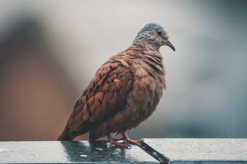 bird vertebrate beak pigeons and doves wildlife
