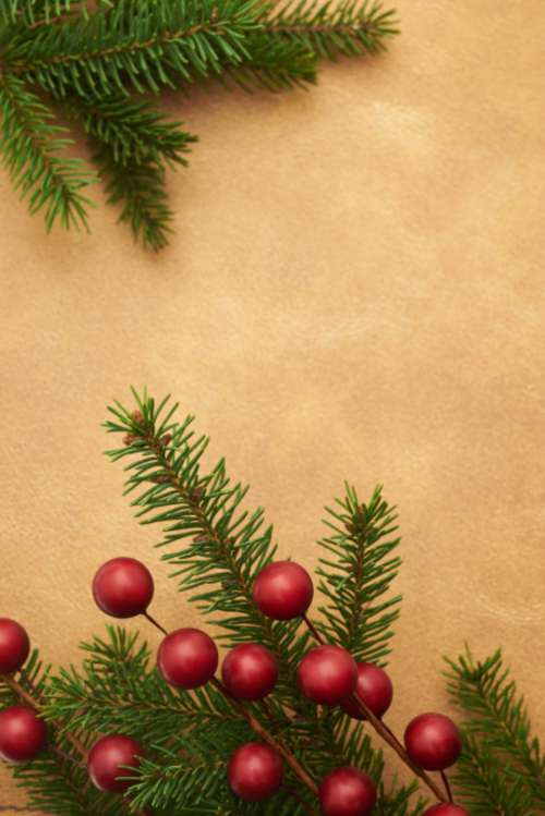 seasonal backgrounds christmas flat lay pine
