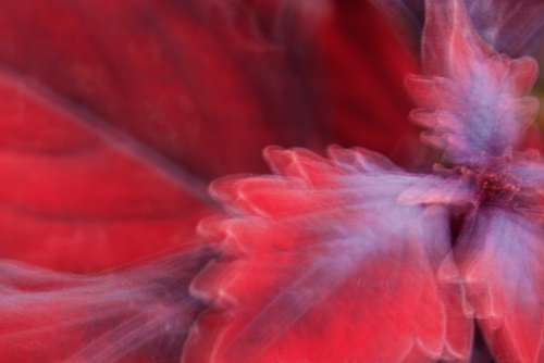 abstract flower background red petal
