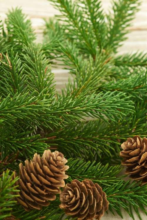 seasonal backgrounds christmas flat lay pine