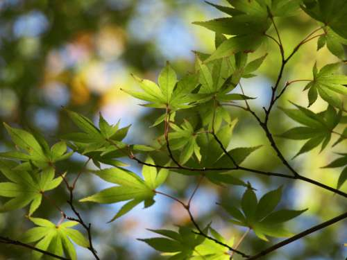 tree leaves background green branch