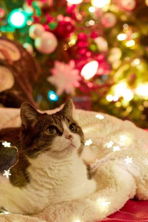 cat christmas pet animal tree
