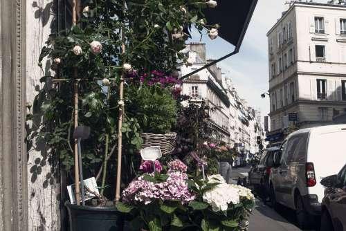 Pink Urban Blooms Photo