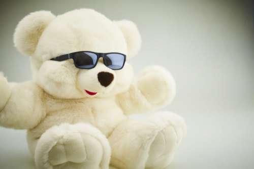Cool Bear Free Photo