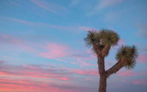 Joshua Tree Sunset Free Photo