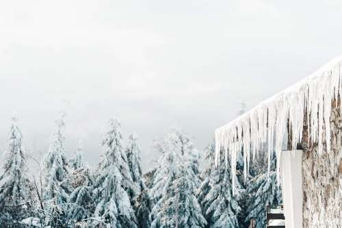 Icicles and White Snowy Forest Free Photo