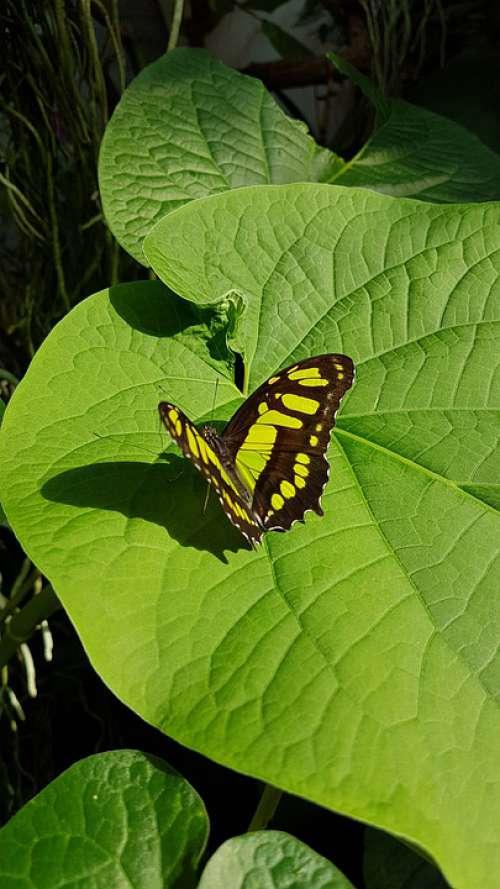Potsdam Biosphere Butterfly Animal Nature