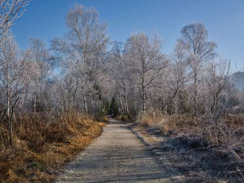 Winter Frost Icy Wintry Away Trees Forest