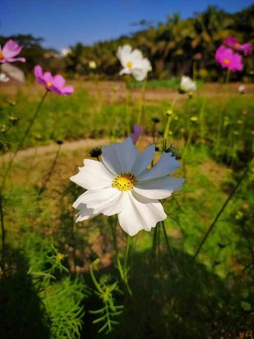 Winter Flower Nature Beauty Bangladesh