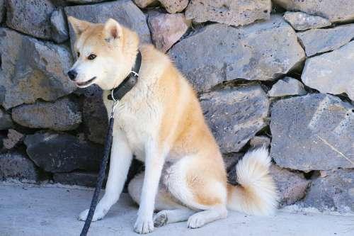 Dog Husky Each Nature Animals