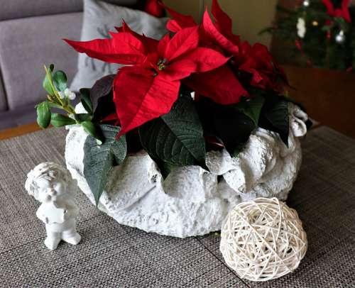 Holiday Decoration Flower The Star Of Bethlehem