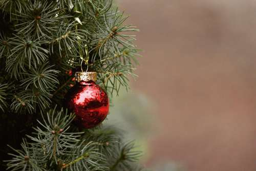 Christmas Tree Fir Tree Christmas Tree Ball