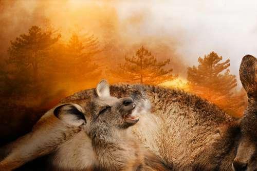 Forest Fire Australia 2020 Brand Disaster