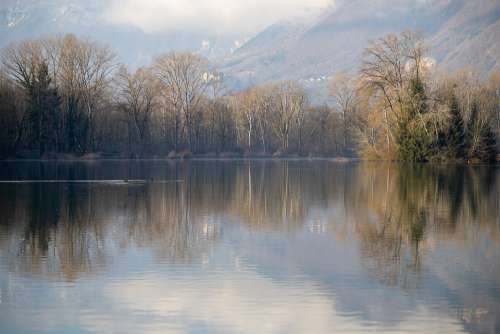 Lake Savoie Tree Rhône-Alpes Water Winter Morning