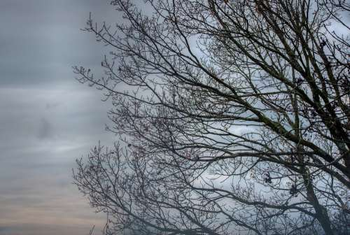 Tree Kahl Winter Cold Cloudy Sky Twilight