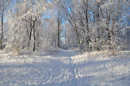Winter Road Snow Nature Landscape Trees Forest
