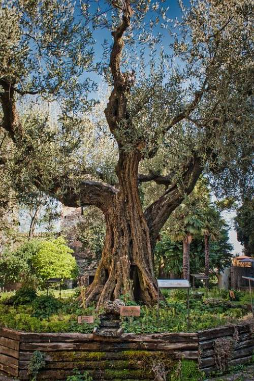 Tree Live Hope Plant Atmosphere