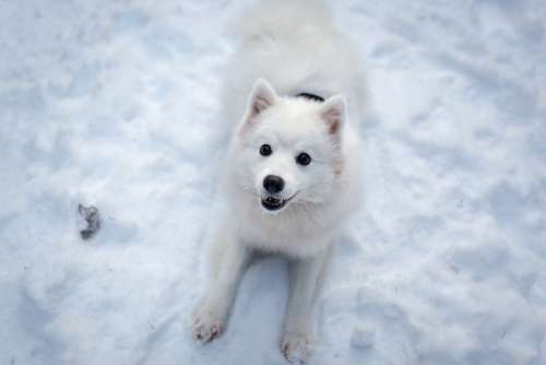 Winter Snow Frosty Cold Cute Animal Dog Nature