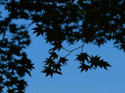 leaves tree branches silhouette sky