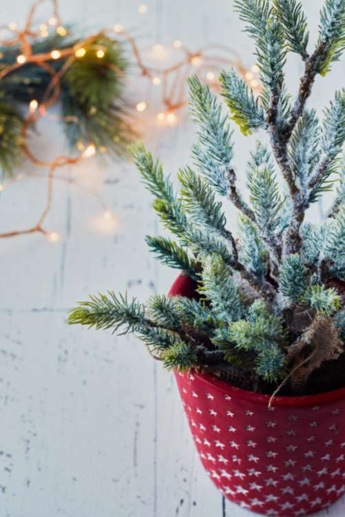 christmas tree background potted small
