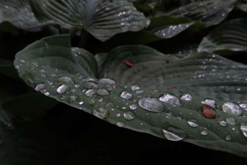 rain drops wet macro spring