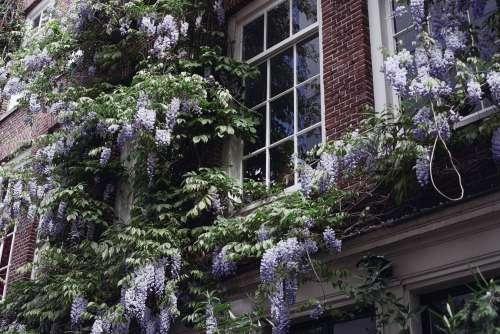 Purple Flowers Around Window Photo