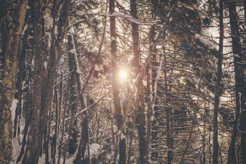 Sunlight In Winter Forest Photo