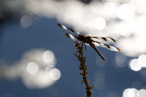 Dragonfly Close Up Free Photo