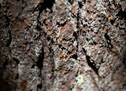 Tree Bark Texture Free Photo