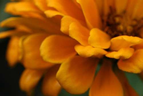 flower macro petals colorful blossom