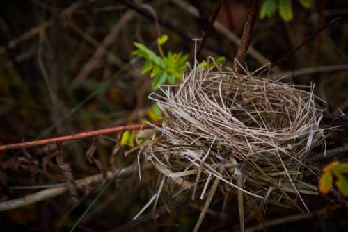 bird nest nature habitat home