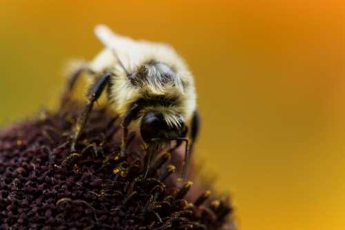 bee spring flower pollen nature