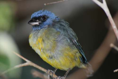 bird trees animal wildlife nature