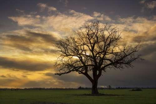 tree sunset silhouette dusk golden