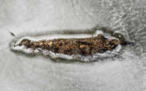 Island Of Frozen Trees Photo