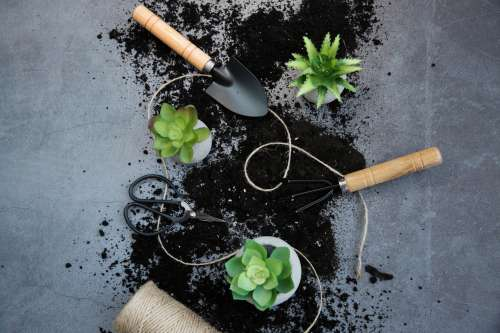 Landscape Image Of Succulents and Gardening Tools Photo