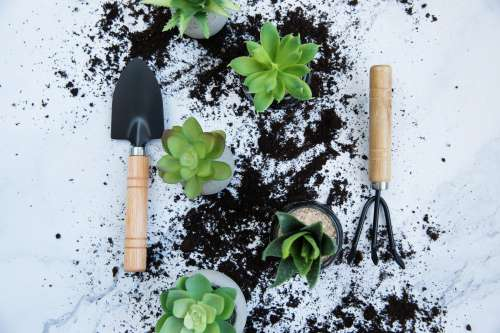 Plant Potting Tools And Soil On A Light Background Photo