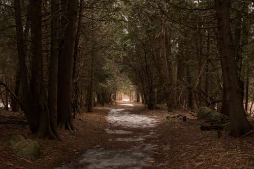 Leafy Winter Forest Path Photo