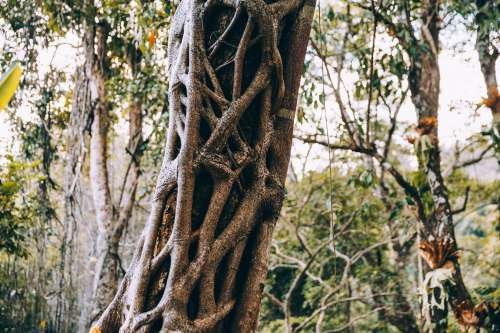Branches Growing Over Tree Trunk Photo