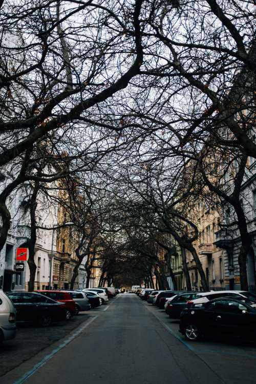 Urban Tree Canopy Photo